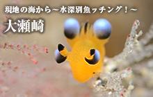 現地の海から~水深別魚ッチング!~ 大瀬崎