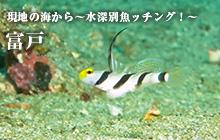 現地の海から~水深別魚ッチング!~ 富戸