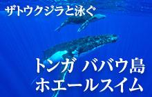トンガでザトウクジラと一緒に泳ぐホエールスイム体験