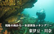 現地の海から~水深別魚ッチング!~ 川奈