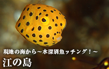 現地の海から~水深別魚ッチング!~ 江の島