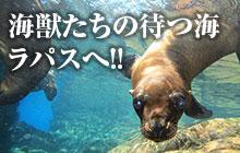 アシカにマンタ!ラパスの海で会える海獣たち