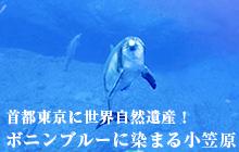首都東京に世界自然遺産! ボニンブルーに染まる 小笠原