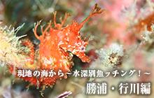 現地の海から~水深別魚ッチング!~ 勝浦・行川