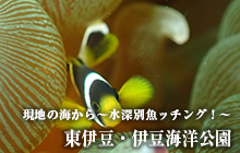 現地の海から~水深別魚ッチング!~ 東伊豆・伊豆海洋公園