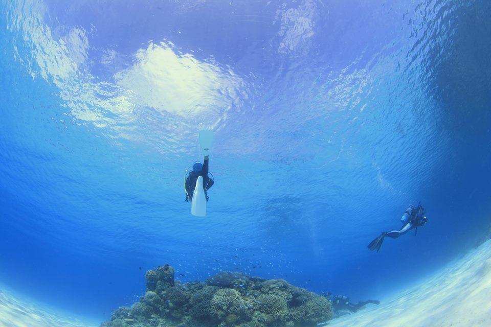 写真提供:《渡嘉敷島ダイビングサービス 月の翼》長谷 和典さん