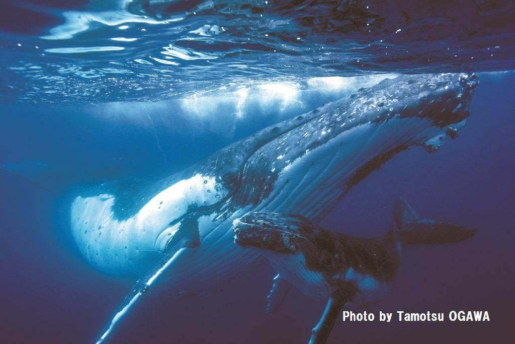 クジラと出会う、冒険の旅に出掛けよう!