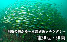 現地の海から~水深別魚ッチング!~ 東伊豆・伊東