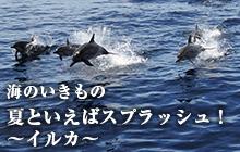 海のいきもの 第34回 夏といえばスプラッシュ!~イルカ~