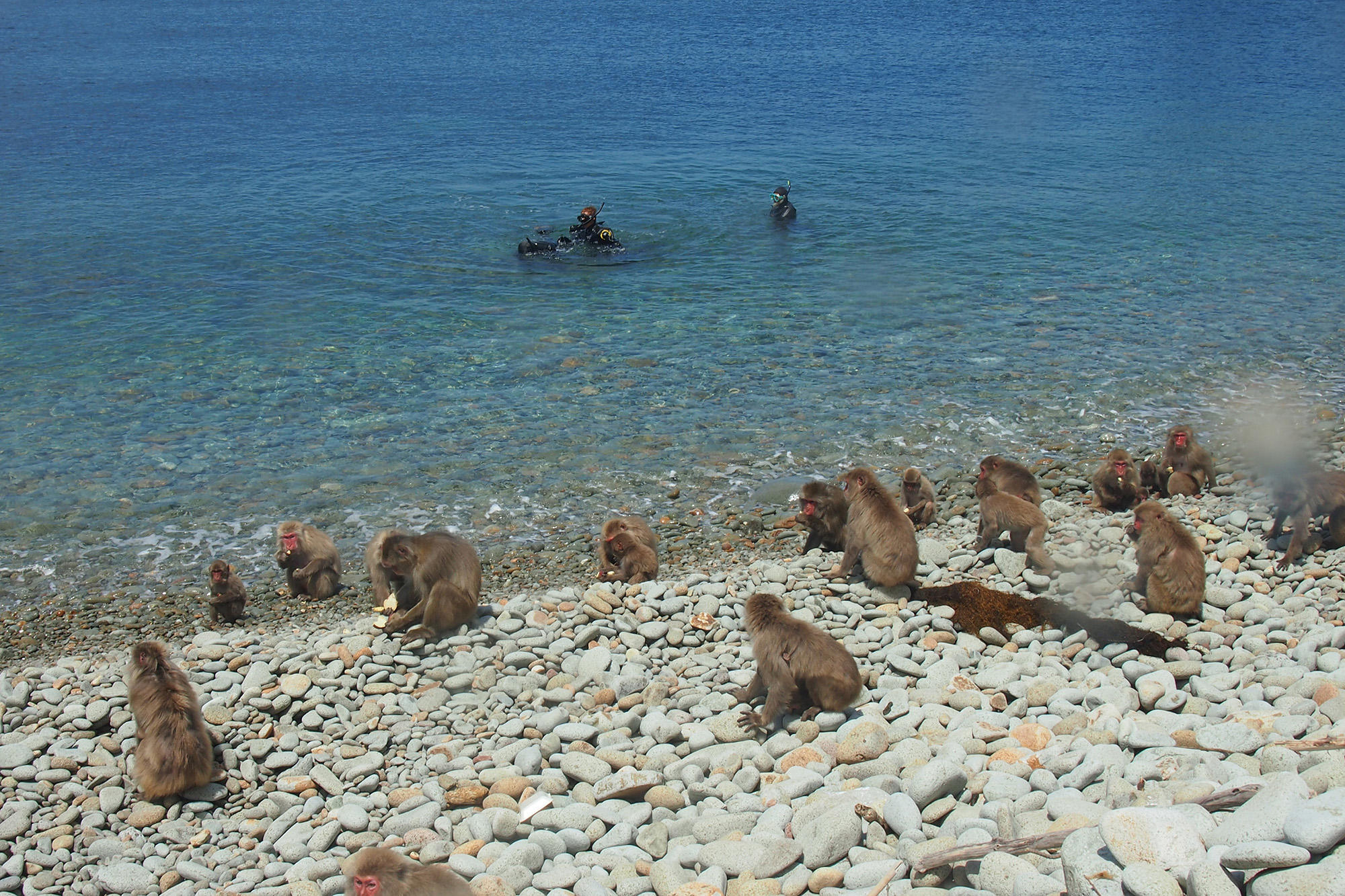 お猿さんのいるビーチで体験ダイビング?!