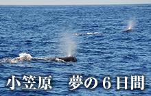 小笠原 夢の6日間