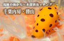 現地の海から~水深別魚ッチング!~ 千葉内房・勝山