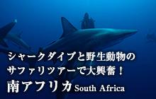 シャークダイブとサファリツアーで大興奮! 南アフリカ