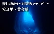 現地の海から~水深別魚ッチング!~ 安良里・黄金崎