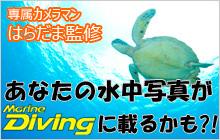 『マリンダイビング』誌上水中写真上達スクールに応募しよう!