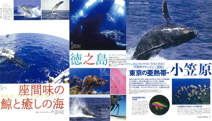 ザトウクジラが日本近海にやってくる!<br /> 狙える海3を特集