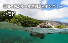 現地の海から~水深別魚ッチング!~ コモド
