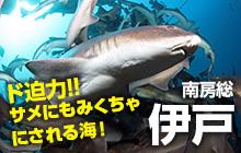 世界有数のサメスポットでサメたちと戯れる・伊戸