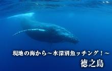 現地の海から~水深別魚ッチング!~ 徳之島