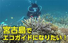 宮古島でエコガイドになりたい! その仕事内容とは…?