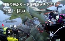 現地の海から~水深別魚ッチング!~ 千葉・伊戸