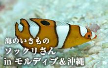 海のいきもの 第42回 ソックリさん inモルディブ&沖縄