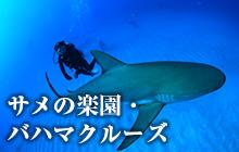 サメの楽園・バハマクルーズ