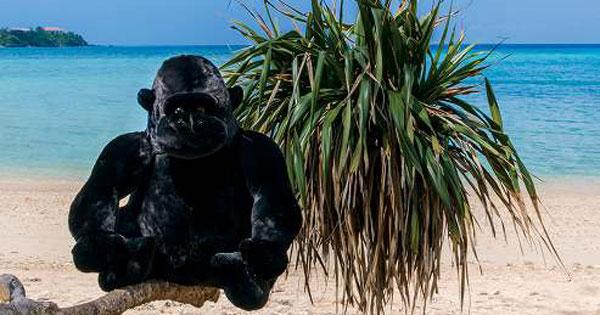 水中写真展「あ、ボク今沖縄です。」開催!