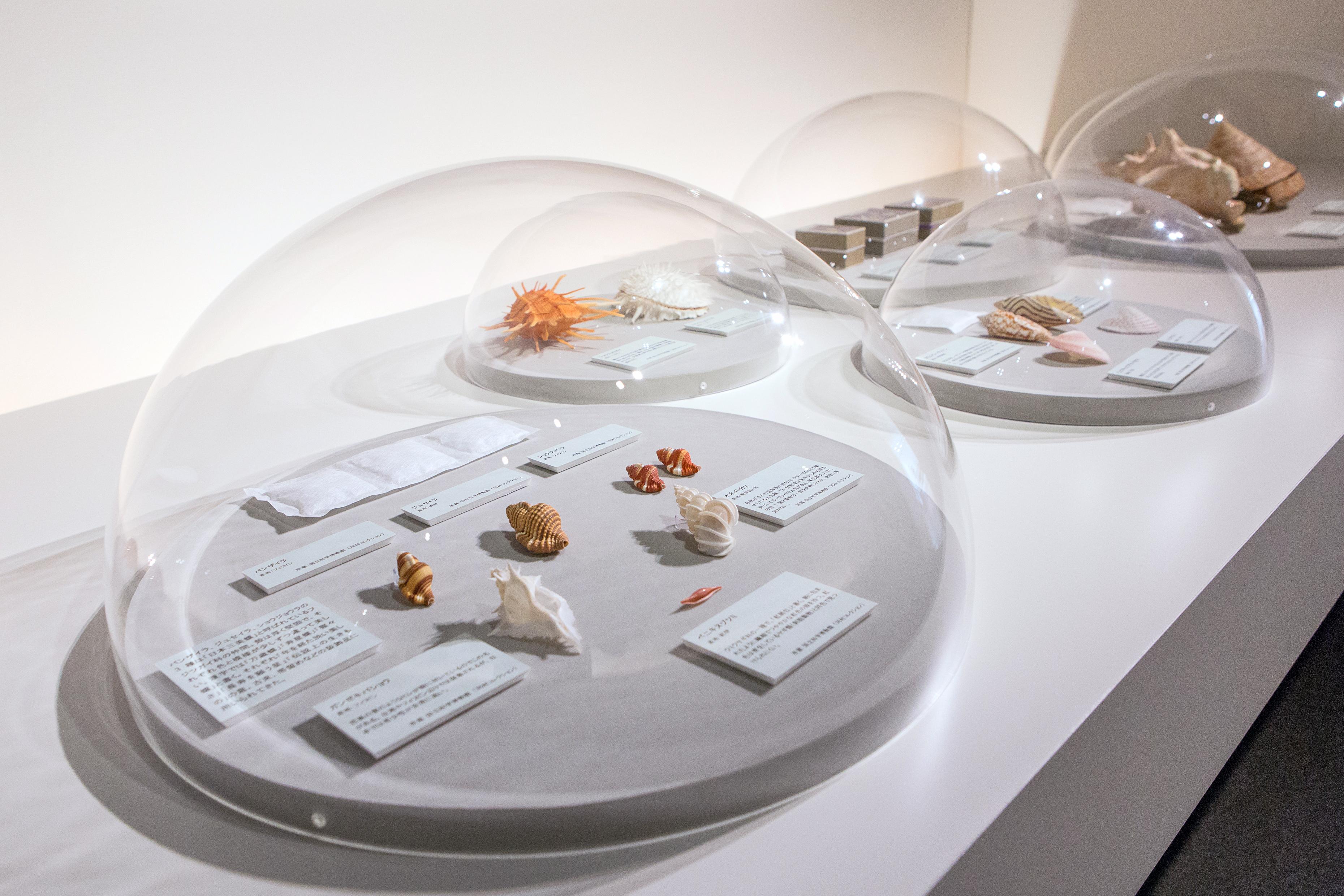 落ち着いた雰囲気のLIXILギャラリー。じっくりと貝の世界に浸ることができる(撮影:白石ちえこ)