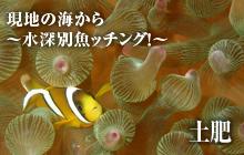 現地の海から~水深別魚ッチング!~ 土肥