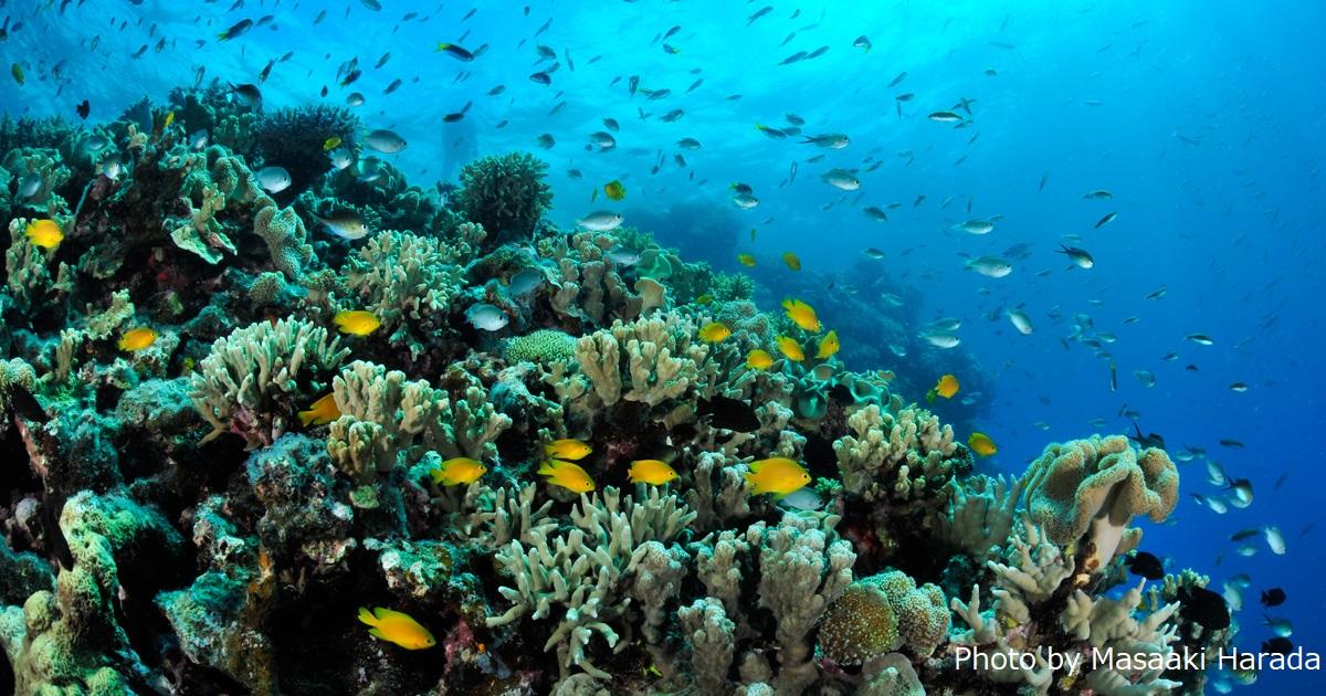 サンゴを守ろう。フォトコン写真募集