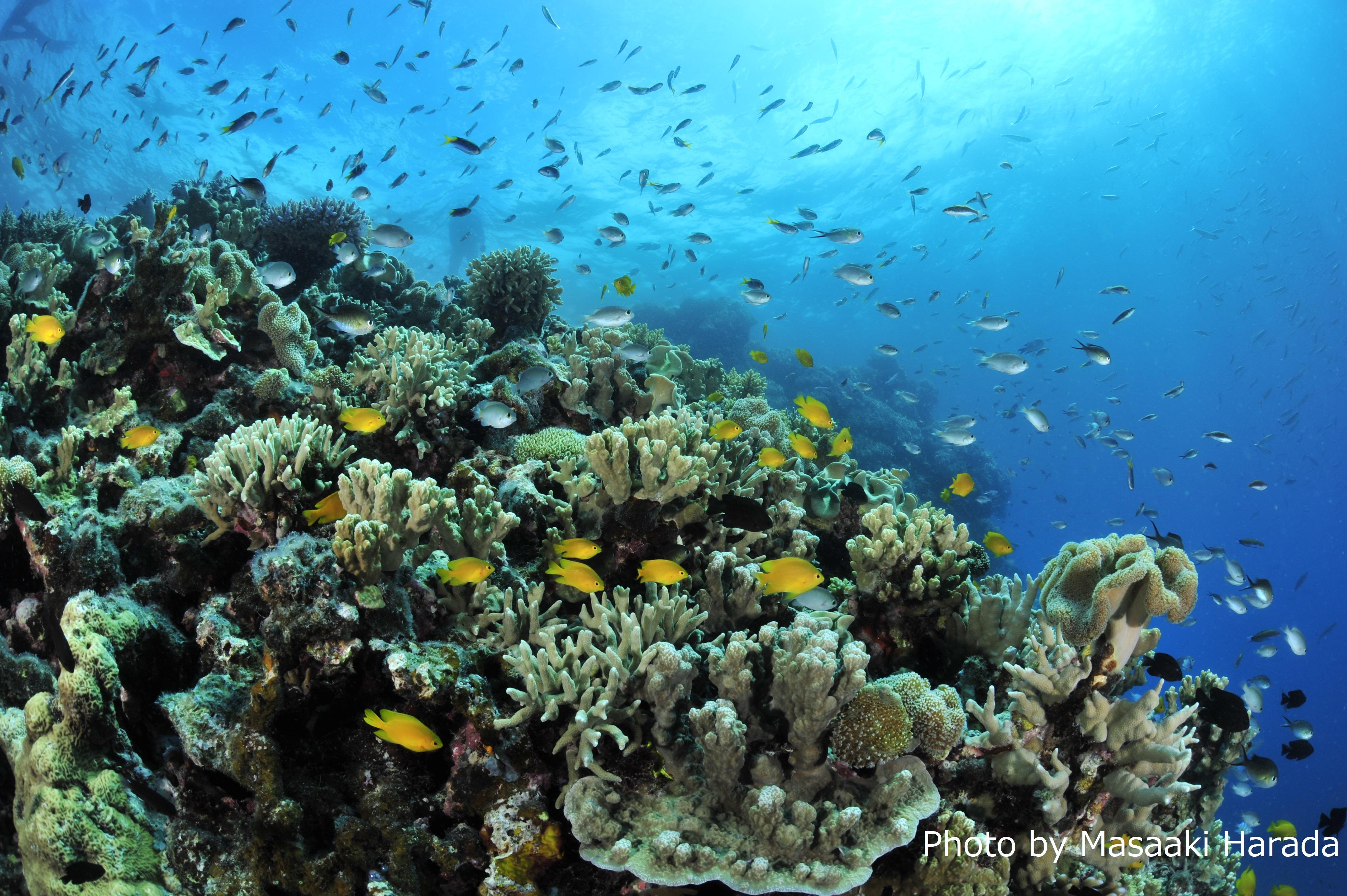 サンゴ礁はたくさんの生物の家(オーストラリア、グレートバリアリーフ)