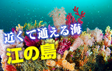 近くて通える海 江の島でスキルアップ!
