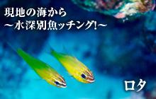 現地の海から~水深別魚ッチング!~ ロタ