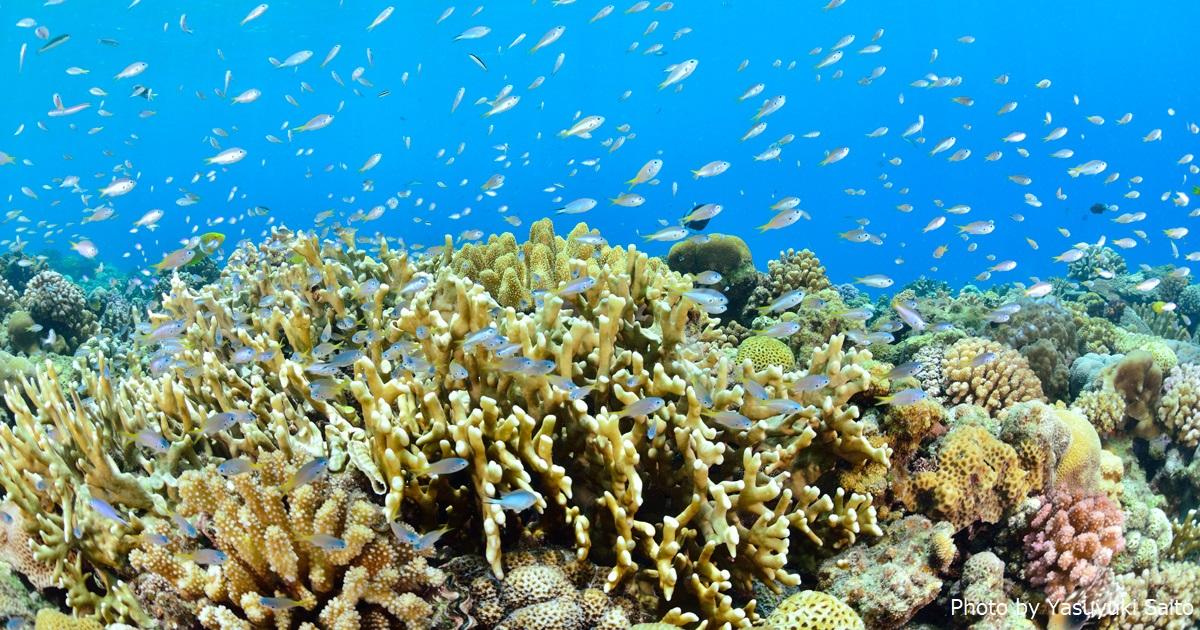 サンゴはみんなの家(沖縄本島)