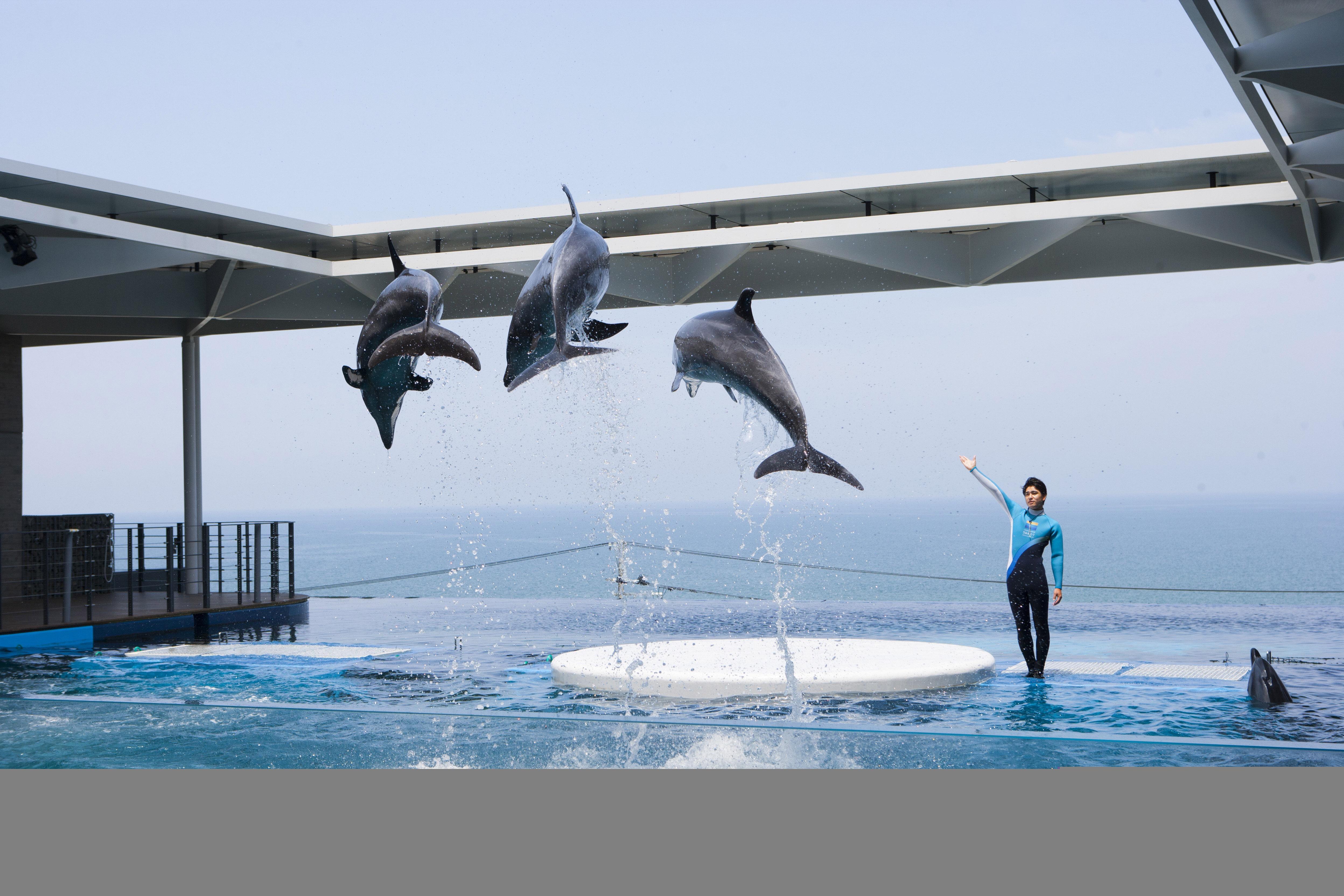 イルカたちの力強いパフォーマンス
