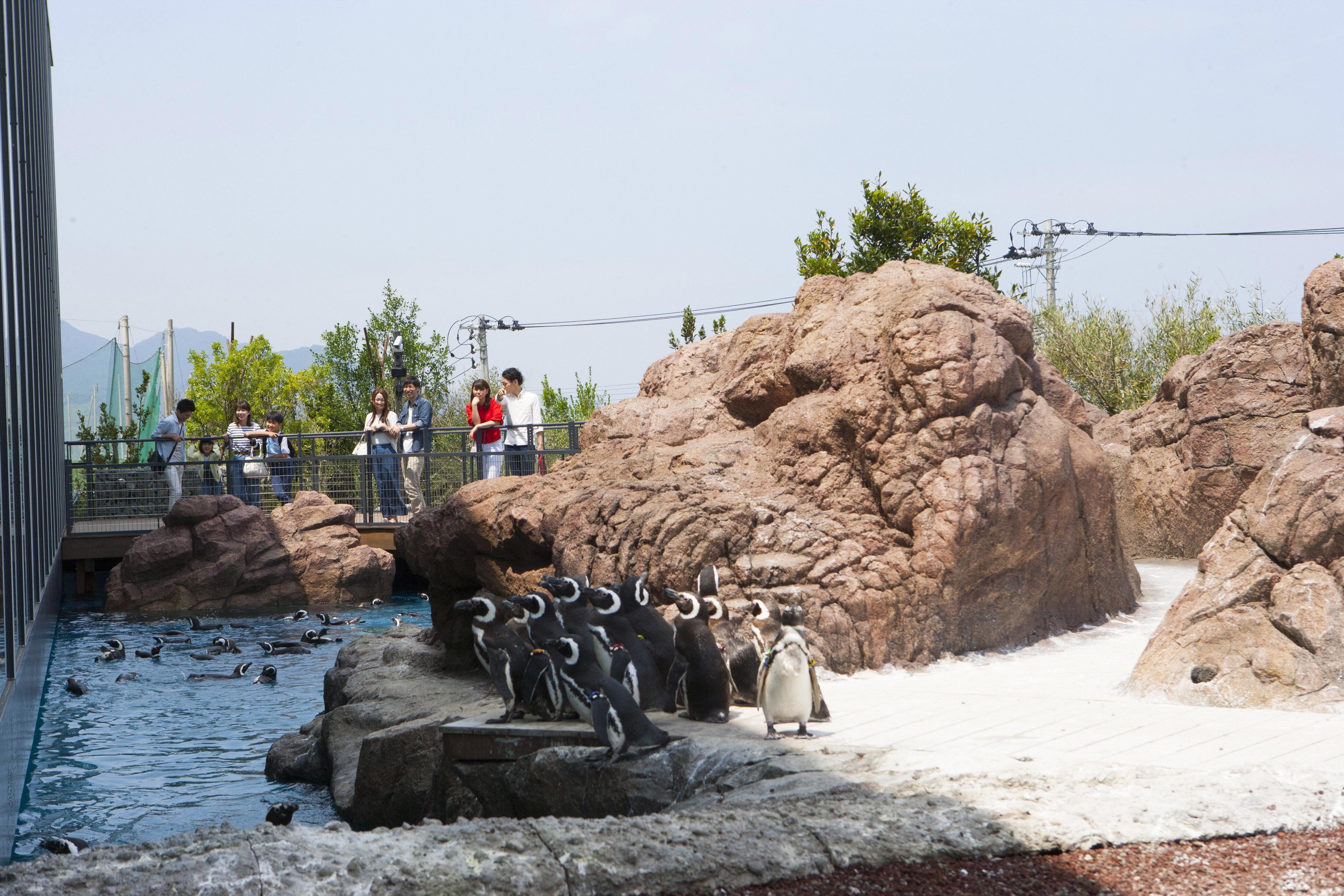 マゼランペンギンミュージアム