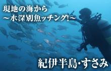 現地の海から~水深別魚ッチング!~ 紀伊半島・すさみ