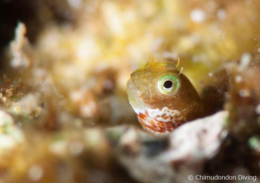 目の上とヒゲのような皮弁にエメラルドグリーンのアイシャドーのような色合い