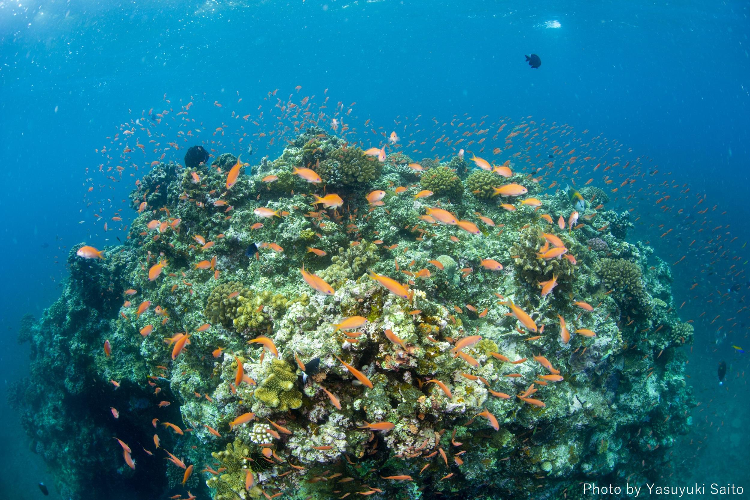 石垣島「樹下美人」 海、そして海に棲む生きものたちのために私たちはなにができるだろう