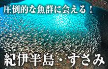圧倒的な魚群に会える!紀伊半島・すさみ