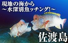 現地の海から~水深別魚ッチング!~ 佐渡島