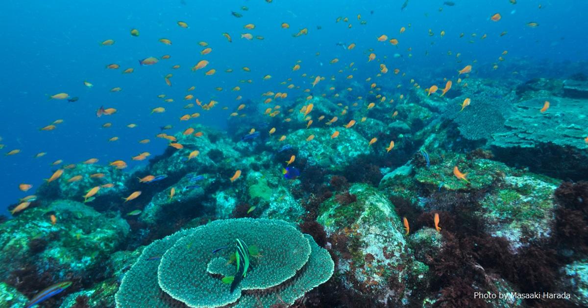 サンゴの分布を投稿して「サンゴマップ」作成