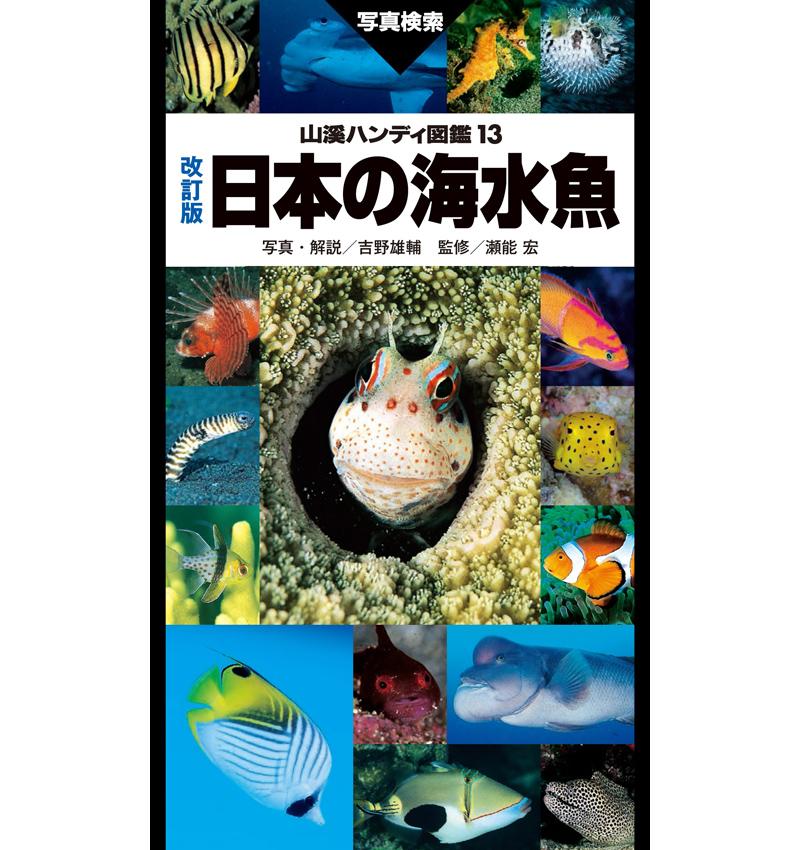 山溪ハンディ図鑑 改訂版 日本の海水魚 定価¥3800+税