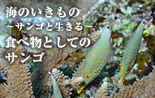 海のいきもの 第48回 食べ物としてのサンゴ
