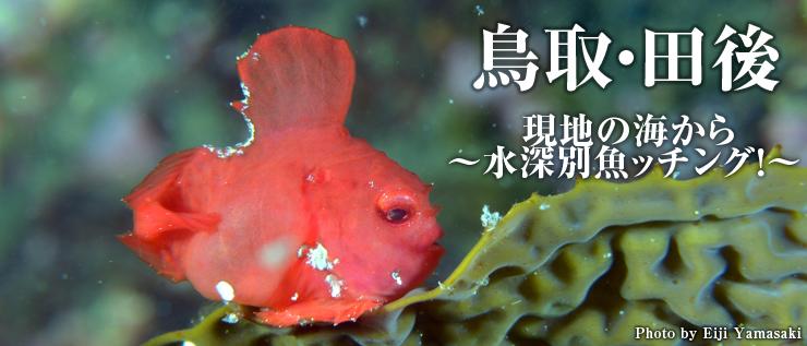鳥取・田後(たじり)