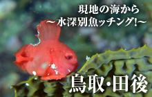 現地の海から~水深別魚ッチング!~ 鳥取・田後