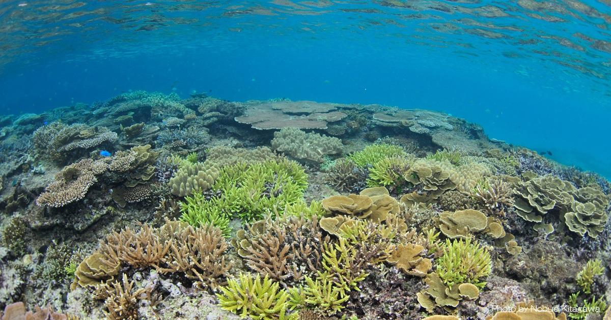 あなたが「#海を守るためにしていること」は?