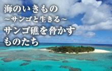 海のいきもの 第49回 サンゴ礁を脅かすものたち