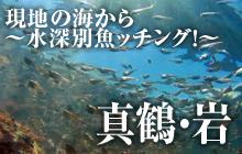 現地の海から~水深別魚ッチング!~ 真鶴・岩(いわ)